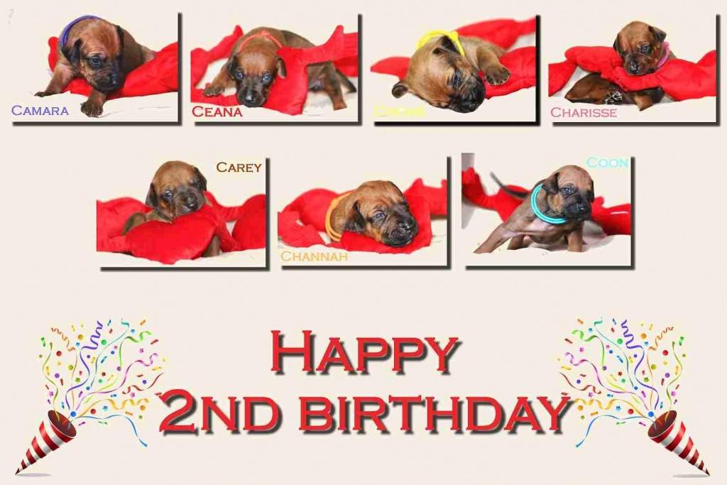 2.narodeninystranka