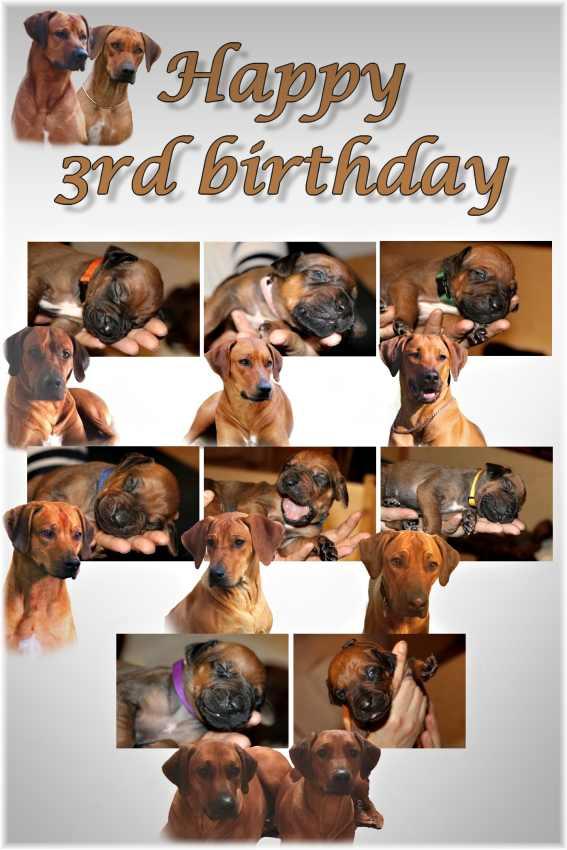 3 narodeniny1web